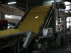 Macaroni Pasta Production Line - Conveyor